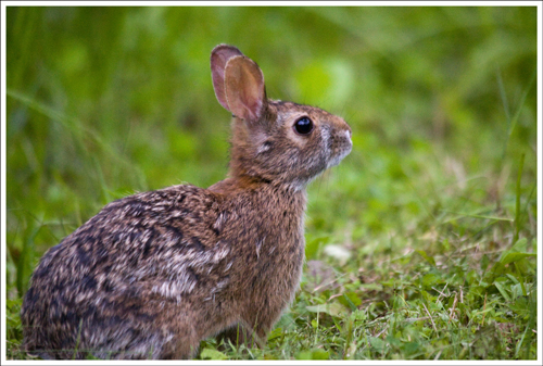 Unlike mystery crashes in the woods, bunnies are not scary.