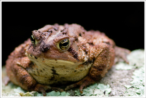 This toad was our summit marker.