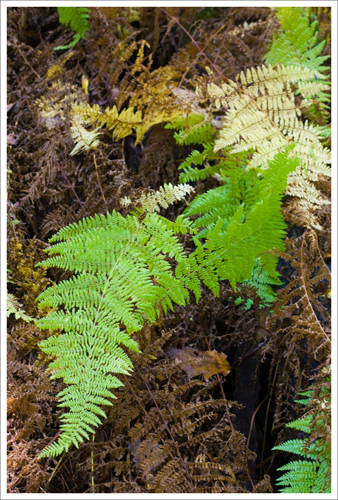 The ferns are already going to gold.