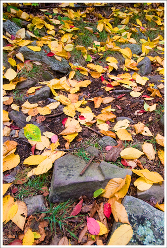 We were surprised to see how many colorful leaves had already fallen.