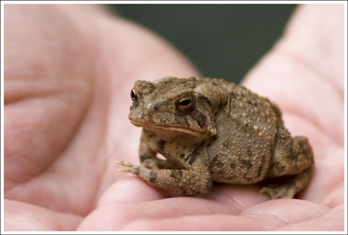 This cute little toad was one of the few wildlife specimens we saw along our walk.