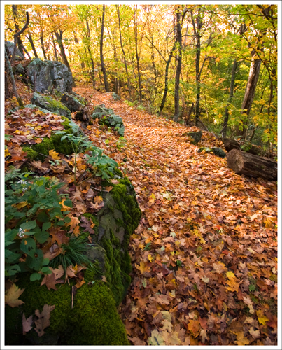 The trail was covered with fall leaves.