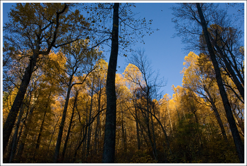 The morning light made the trees glow golden.