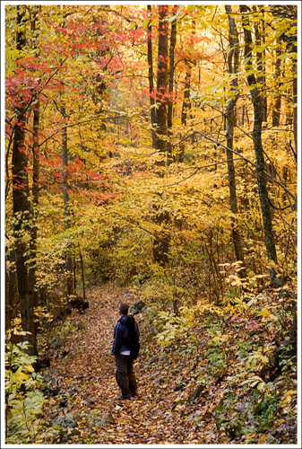 The woods on the Doyles River - Jones Run trail were gold and red.