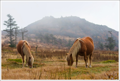 Mt. Rogers is beautiful, rugged and home to several herds of wild ponies.