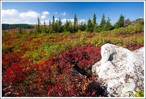 The landscape of Dolly Sods reminds us of Maine.