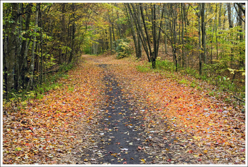 The Virginia Creeper is a beautiful trail that passes through the woods, often alongside a rushing stream.