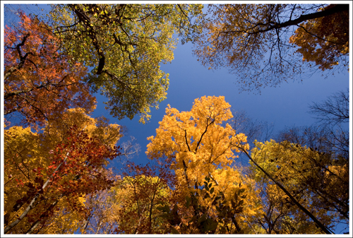 The trees above displayed beautiful fall colors