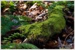Moss on the Big Run Trail