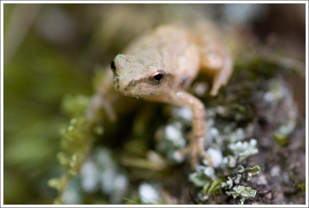 A tiny frog