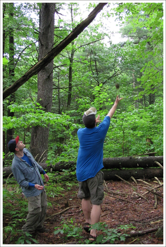 Adam Throws the Rope Over the Limb