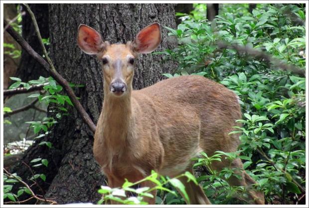 Friendly Buck