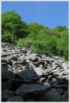 Talus Slope on Hawksbill