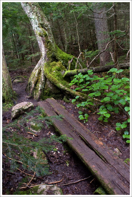 Mossy Trail and Boardwalks