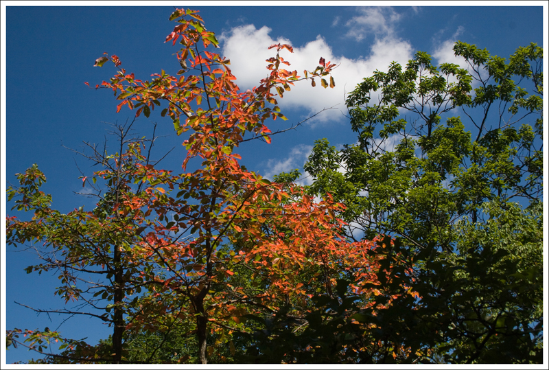 Signs of Fall?