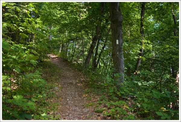 Appalachian Trail to Powell Gap