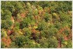A little fall foliage