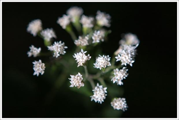 Late Wildflowers