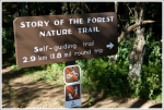 No Dogs or Bikes Allowed on Story of the Forest