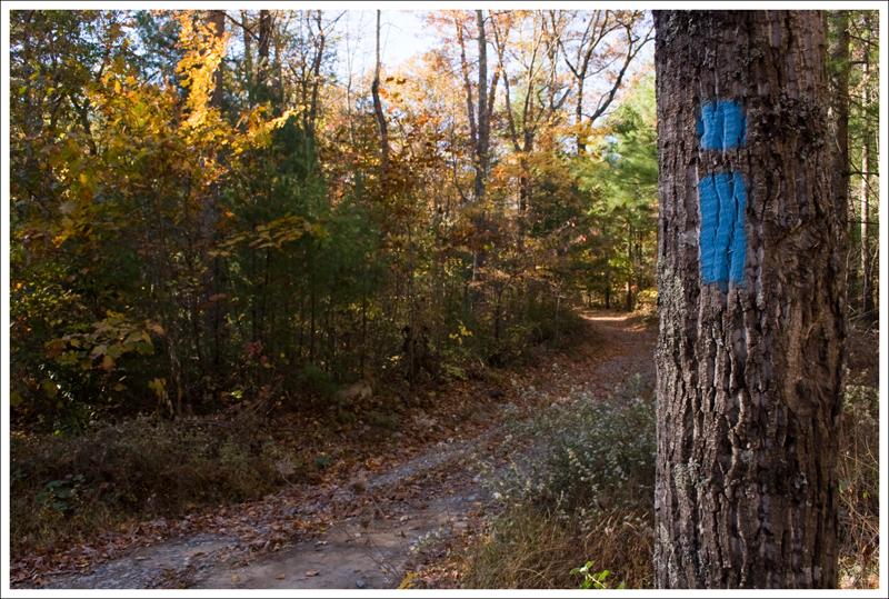 Blue Blazed Trail Gap Creek Trail
