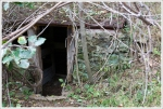 Snead Farm Root Cellar