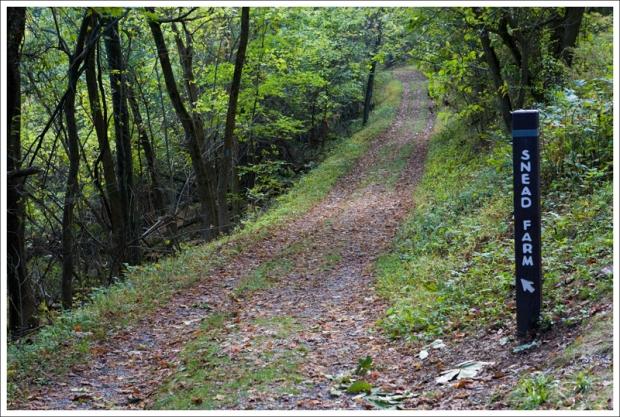 The Snead Farm Fire Road is pleasant walking.