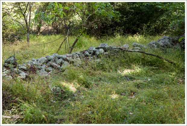 Old stone wall in Fox Hollow