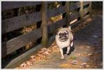 Wookie Running Across Bridge
