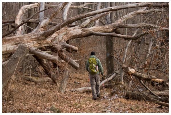 Gnarled Tree on the Saddleback Trail