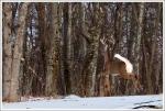 Buck Leap