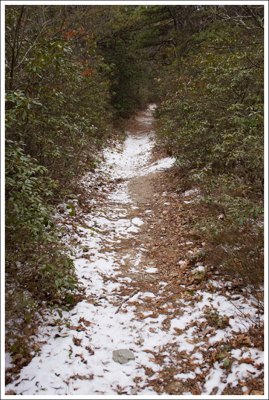 Snowy Laurel-Lined Trail