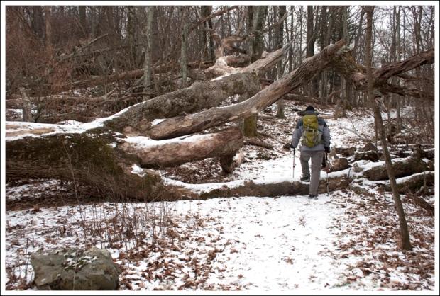Tree Near Bearfence Trail
