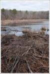 old beaver dam