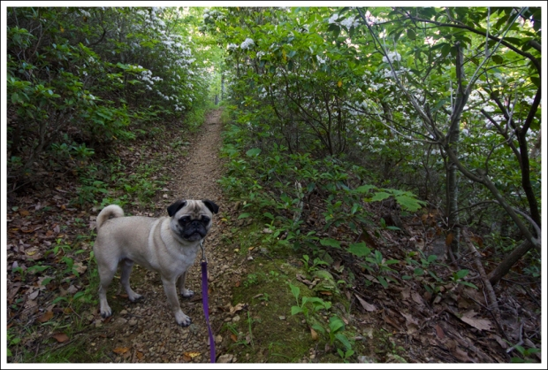 Wookie on the Appalachian Trail