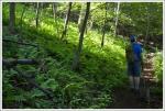 Ferns Along the Trail