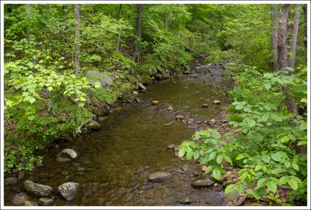 Belfast Creek