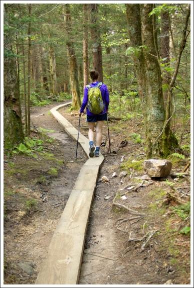 Boardwalks on the Forney Ridge Trail