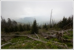 Dead Fir Trees