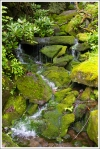 Green and Mossy Water