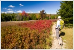 Dolly Sods is Spectacular in the Fall