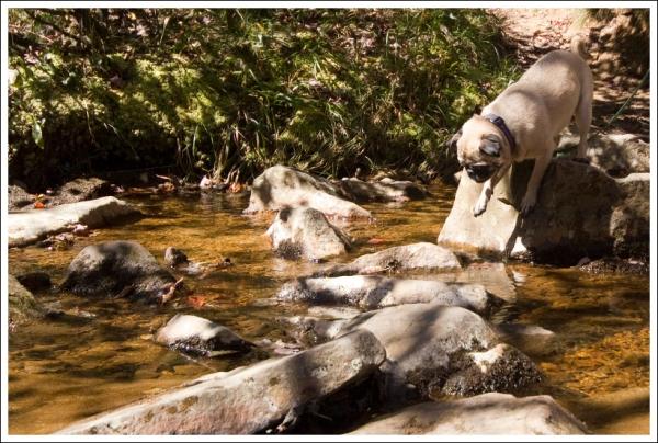 Wookie Crossing Red Creek