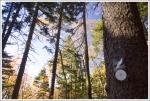 Tanawha Trail Marker