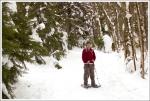 Snow on Spruce