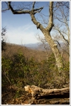 Views Along the Shenandoah Mountain Trail