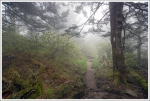 Appalachian Trail in the Fog
