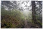 Appalachian Trail in the Fog