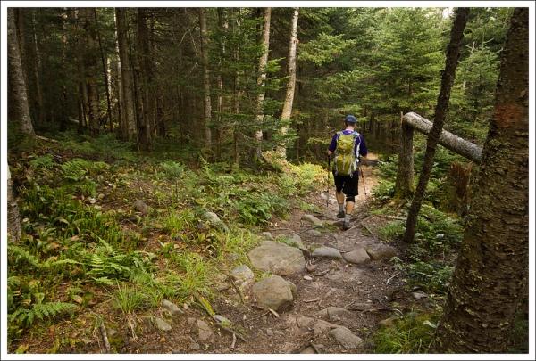 Snapper Trail