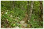 Pretty trail