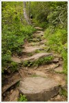 Pisgah Trail