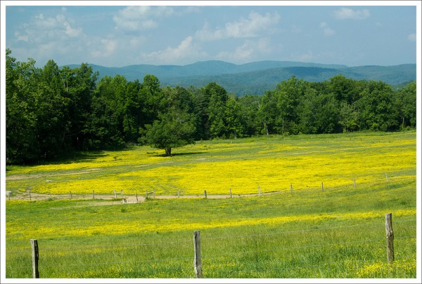 The open meadows and mountain backdrops define Cades Cove.